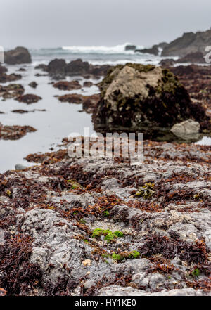 Tide pools at MacKerricher State Park near Fort Bragg in Northern California along Highway 1 on overcast day, great - Stock Photo