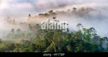 Mist hanging over lowland rainforest just after sunrise. Danum Valley Conservation Area, Sabah, Borneo. - Stock Photo