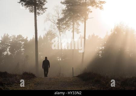 Sweden, Sodermanland, Skeppsvik, Silhouette of man walking in forest at dawn - Stock Photo