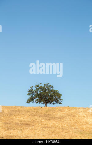 USA, California, Yosemite, Single tree against blue sky - Stock Photo