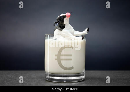 Miniature cow sinks into a milk glass, low milk prices, Miniaturkuh versinkt in einem Milchglas, niedrige Milchpreise - Stock Photo