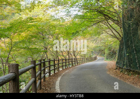 Empty winding road through forest with autumn leaves on the road in Shosenkyo Gorge, Japan - Stock Photo