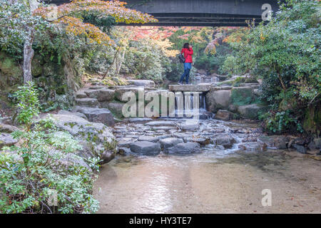 Woman in red jacket stands on stone bridge and takes photo in forest with autumn colour trees and river in Miyajima, - Stock Photo