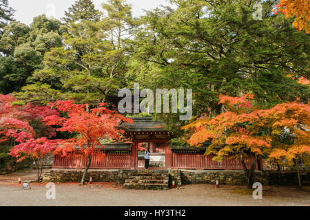 Woman tourist stands in front of temple building surrounded by autumn colour trees and takes photo towards camera - Stock Photo