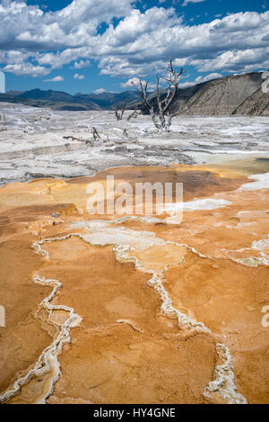 Canary Spring at Mammoth Hot Springs Upper Terrace, Yellowstone National Park, Wyoming. - Stock Photo