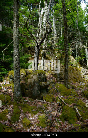 Fallen and broken tree trunk covered in moss left to rot for What is a tree trunk covered with 4 letters