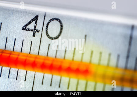 Clinical thermometer at more than 40 degrees, fever, Fieberthermometer bei ueber 40 Grad, Fieber - Stock Photo