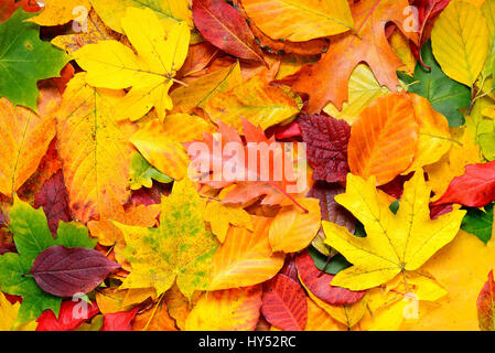 Coloured autumn sheets, Bunte Herbstblaetter - Stock Photo