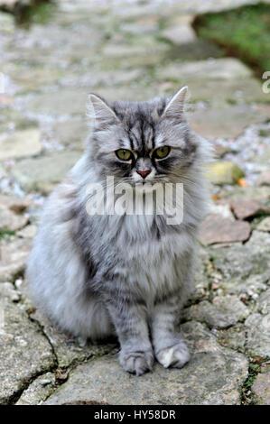 adorable, ahead, animal, background, beast, beautiful, cat, charming, childhood, closeup, close-up, curious, cute, - Stock Photo