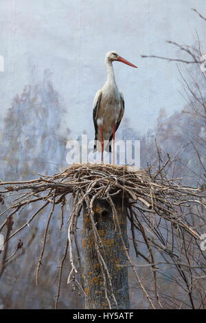 Sweden, Uppland, Djurgarden, Staffed stork standing in nest - Stock Photo