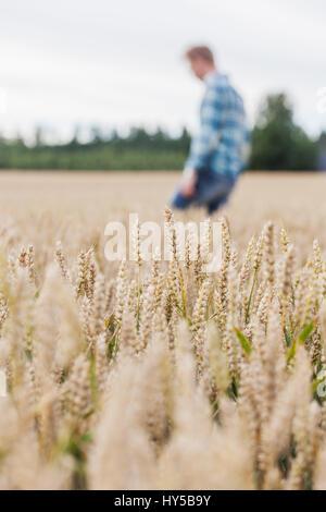 Finland, Uusimaa, Siuntio, Mid adult man walking in wheat field - Stock Photo