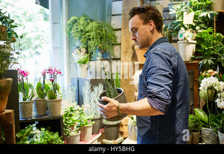 Sweden, Florist working in flower shop - Stock Photo