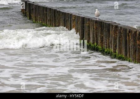 Wooden breakwaters in the waters of the Baltic Sea in Kolobrzeg, Poland - Stock Photo