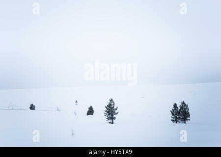 A beautiful, minimalist landscape of snowdrift in Norway. Clean, light, high key, decorative look. - Stock Photo