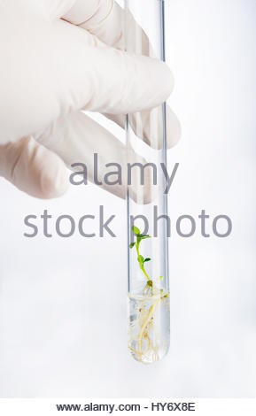 Hand holding test tube with seedling - Stock Photo
