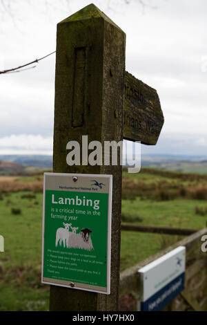 Steel Rigg, UK. 01st Apr, 2017. Sign for the lambing season on Hadrian's Wall in Northumberland, England. Sheep - Stock Photo
