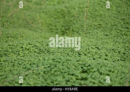 Green fresh flower - Stock Photo