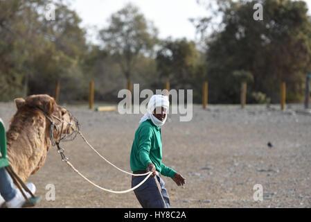 Camel tour in desert - Stock Photo