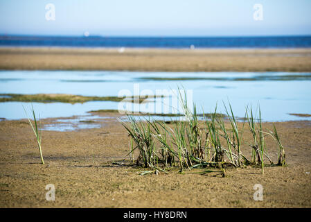 lonely grass on the beach - Stock Photo