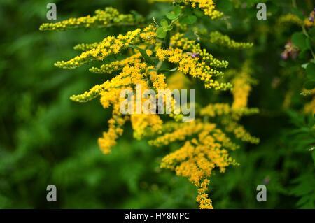 Golden Wildflowers in Georgia - Stock Photo