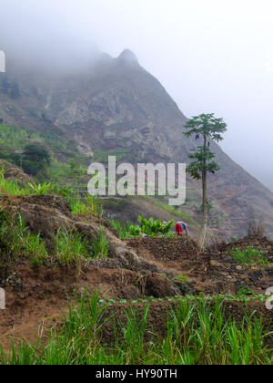 A farmer works in his terraced vegetable garden in the foggy Valley of Paul, Santo Antao, Republic of Cabo Verde, - Stock Photo