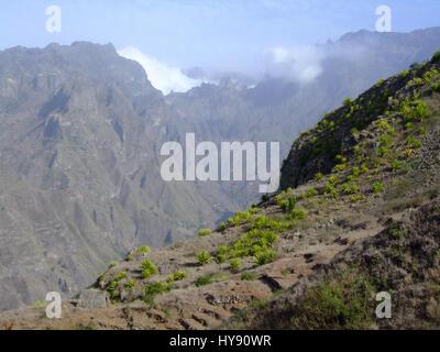 Arid Landscape With Agave Pita Americana Plants Cabo De
