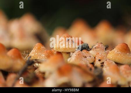 Mini-mushrooms macro lens - Stock Photo