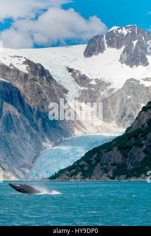 A humpback whale leaps out of the water in front of a glacier in Kenai Fjords National Park near Seward, Alaska. - Stock Photo