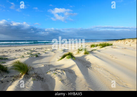 Picturesque sand dunes and grass tufts at Conjola Beach, Shoalhaven, South Coast, New South Wales, NSW, Australia - Stock Photo