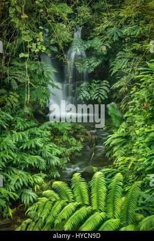 Waterfall on the trail to Akaka Falls; Akaka Falls State Park, Hamakua Coast, Island of Hawaii. - Stock Photo