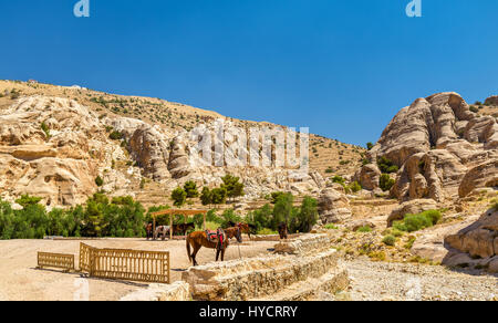 Bedouin hourses rest in the ancient city of Petra - Stock Photo
