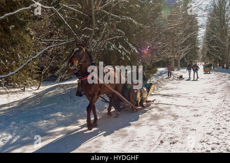 Horse drawn sleigh with tourists in Koscieliska valley near Zakopane, Poland - Stock Photo