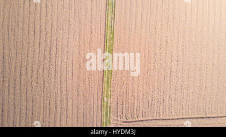 Man running from above, aerial view, workout, sports, marathon. Agricultural fields. Countryside - Stock Photo