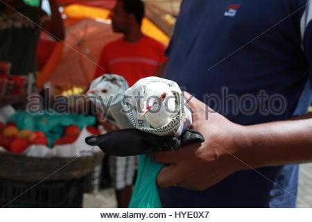 A man holding white Doves wrapped in paper. - Stock Photo