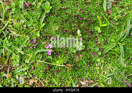 Flowers and green grass background in the spring - Stock Photo