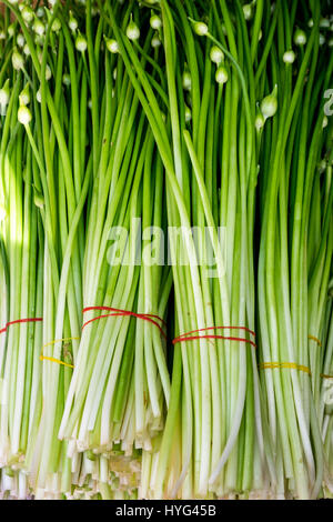 Close-up detail of fresh spring onion vegetables on the market - Stock Photo