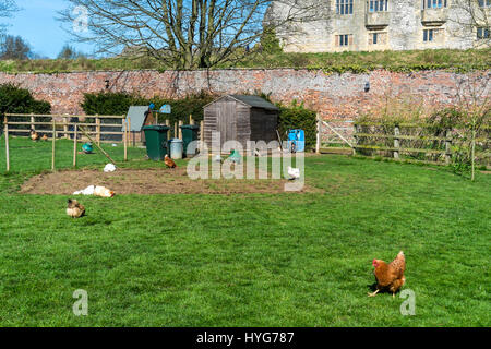 A pen with free range pedigree poultry on display at Helmsley walled garden North Yorkshire - Stock Photo