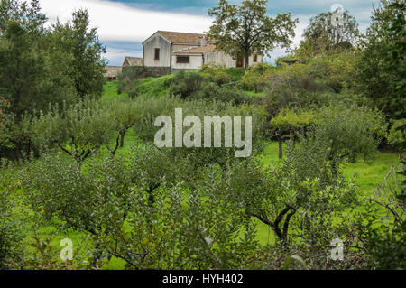 Agricultural cultivated land with the farm in high - Stock Photo