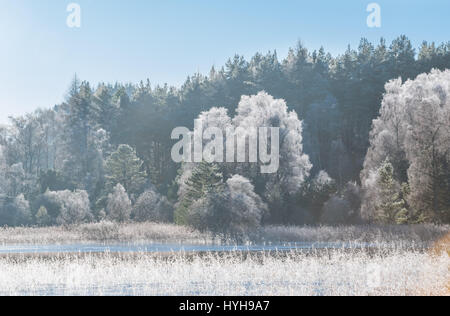 Magnificent forest covered by frost in Scottish Highlands - Stock Photo
