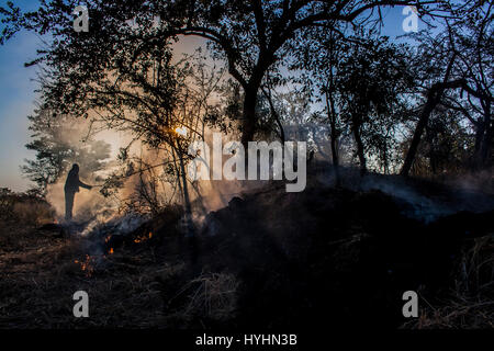 Burning grass - Stock Photo