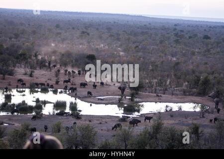 Animals drinking at sunset in zimbabwe - Stock Photo