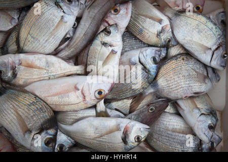 White breams, fishes, port, Trani, Puglia, Italy, Europe - Stock Photo