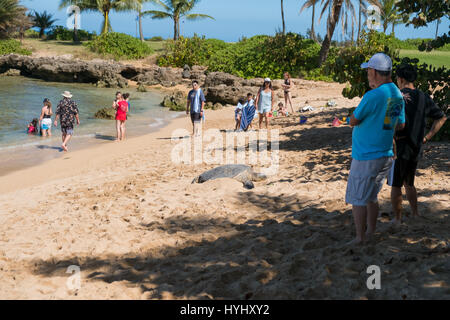 HALEIWA, OAHU, HAWAII - FEBRUARY 15, 2017: Tourists fill the beach and take pictures and selfies with cameraphones - Stock Photo