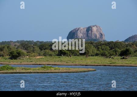 Sri Lanka, Yala National Park aka Ruhuna National Park (block 1) est. in 1900. Scenic view of landmark Elephant - Stock Photo