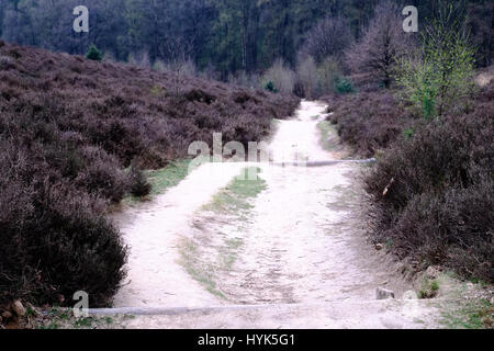 Heath and path at the Posbank in Rheden, National park Veluwe, Netherlands. - Stock Photo
