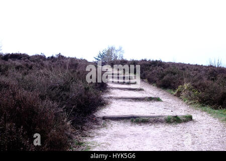 Path with steps  at the Posbank in Rheden, National park Veluwe, Netherlands. - Stock Photo