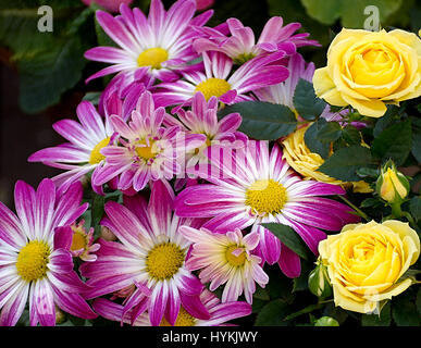 Margarets and yellow roses bouquet on street market stall in Stoke on Trent,Staffordshire,United Kingdom.Beautiful - Stock Photo