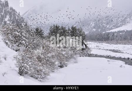 Winter landscape in the Himalayas, Rakcham, Sangla Valley, Himachal Pradesh - Stock Photo