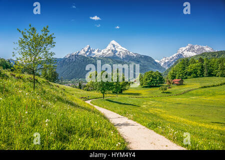 Idyllic summer landscape in the Alps with fresh green mountain pastures and snow-capped mountain tops in the background - Stock Photo