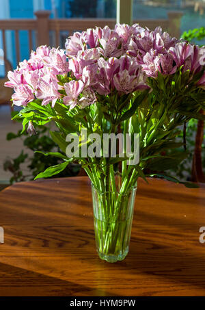 Alstroemeria; Peruvian lily; lily of the Incas in full bloom Stock Photo